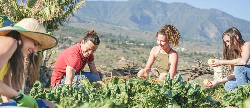 WWOOFing - Weltweit auf ökologischen Farmen mitarbeiten